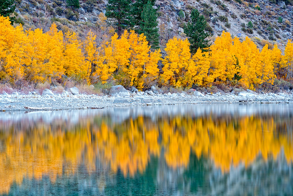 Fall Aspens - June Lake-2
