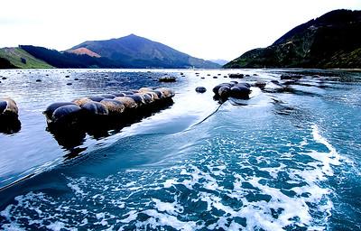 Mussel Buoys- Pelorus Sound, New Zealand