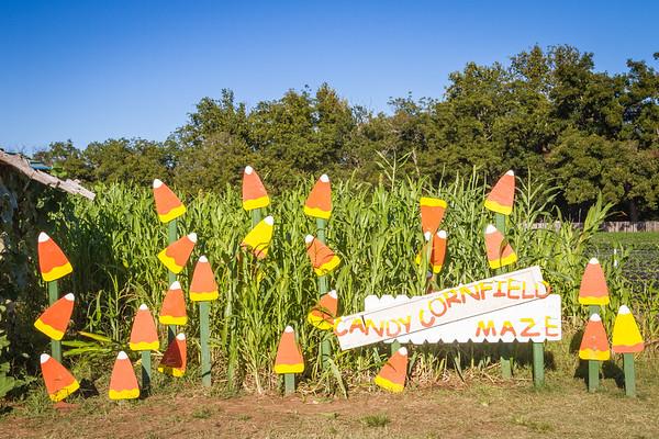 Candy cornfield