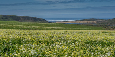Abbotts Lagoon, Point Reyes National Seashore.