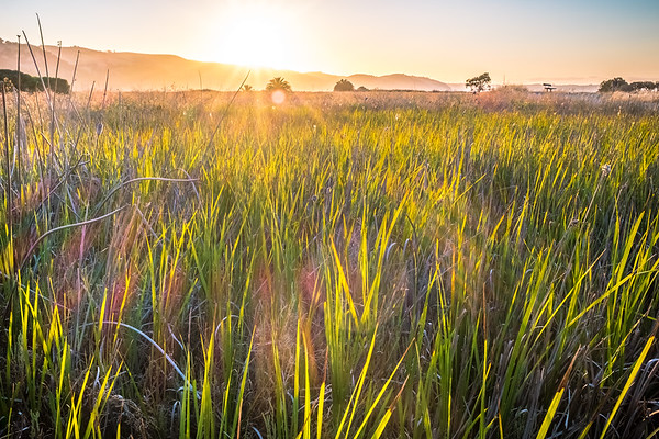 Marshland sunbeams