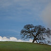 Lone Oak, Pacheco State Park