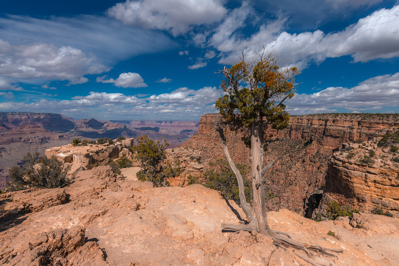 Lone tree on the South Rim of the Grand Canyon, Arizona