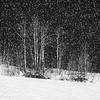 """Snowy, Snowy Night"""
