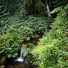 Garden Like Stream and Cascade