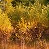 soft autumn colors ...
