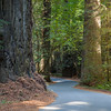 Driving through Redwoods