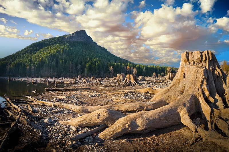 Stump, Rattlesnake Mountain
