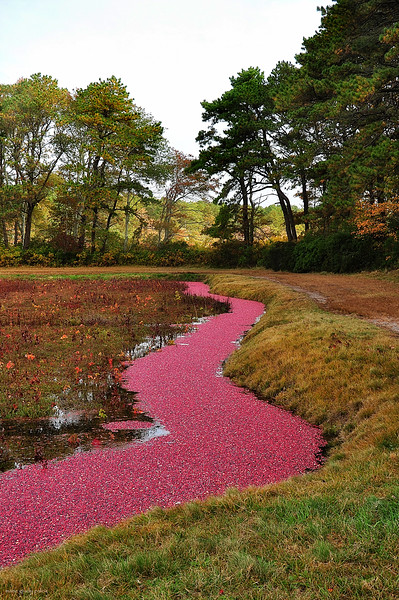 River of Cranberries