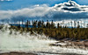 Steam from Norris Geyser Basin Yellowstone<br /> <br /> Thanks so much for all your comments on my abandoned board walk yesterday!  They are all so much appreciated!
