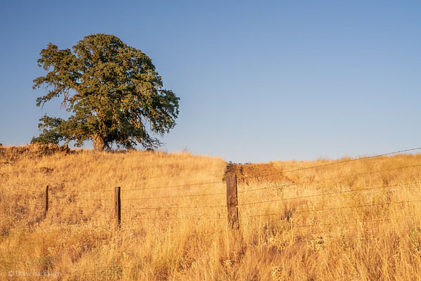 Late Summer Afternoons in the Fields