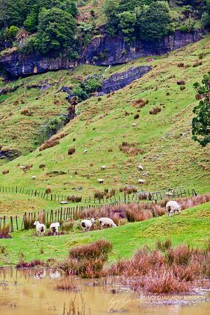 Hobbiton Movie Set || Matamata, New Zealand  Canon EOS 5D Mark II w/ EF70-200mm f/2.8L USM: 100mm @ ¹⁄₁₀₀ sec, f/3.2, ISO 100