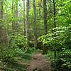 GSMNP Allbright Grove Trail