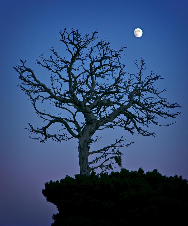 Manchester Moon, Mendocino County, California