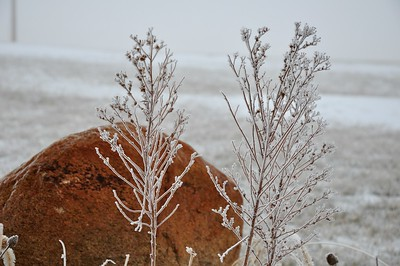 Red Granite with Frosty Weed
