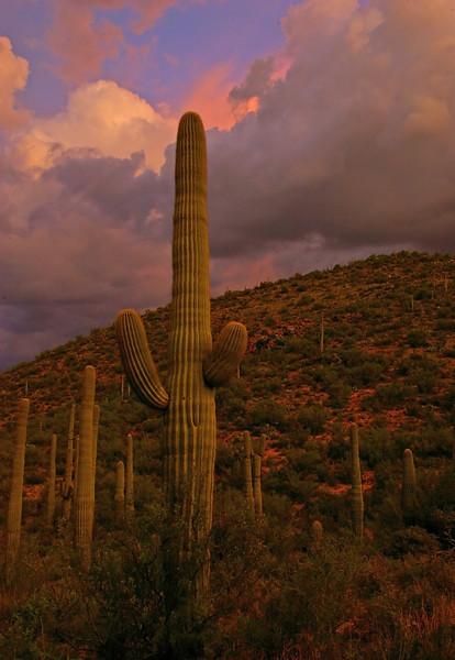 Cactus and Clouds, Arizona