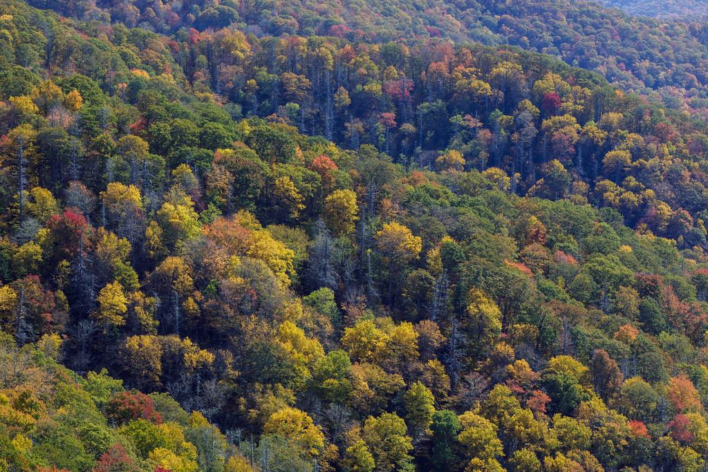 IMAGE: https://photos.smugmug.com/Landscapes/i-k5tLBcz/0/fadc4840/XL/IMG_21112-171026-XL.jpg