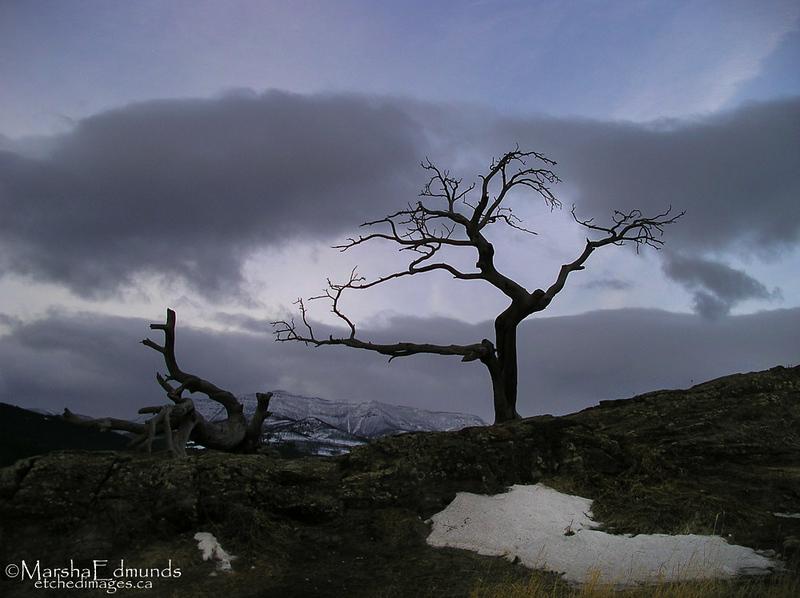 Tree of Burmis