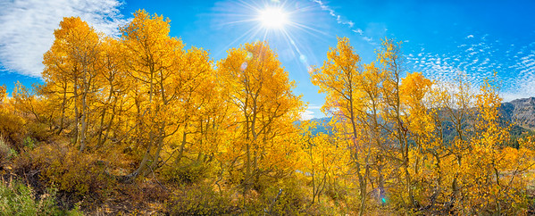 Fall Colors Panorama - Sonora Pass