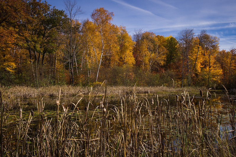 Michigan Marsh in Autumn