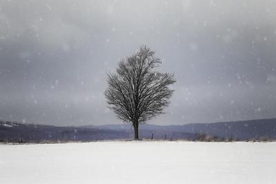 Abundant Solitude