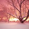 Breaking Winter Storm II, North Andover, MA