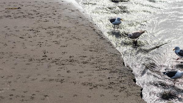 Gull baths