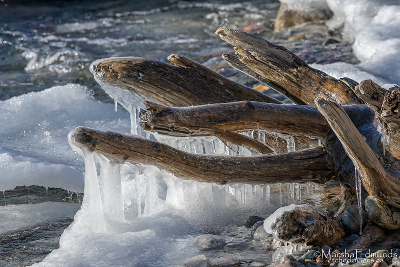 Ice Draped Driftwood Reaching into Fine Iciciles