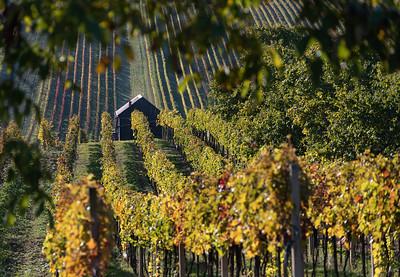 Vineyards in Čejkovice