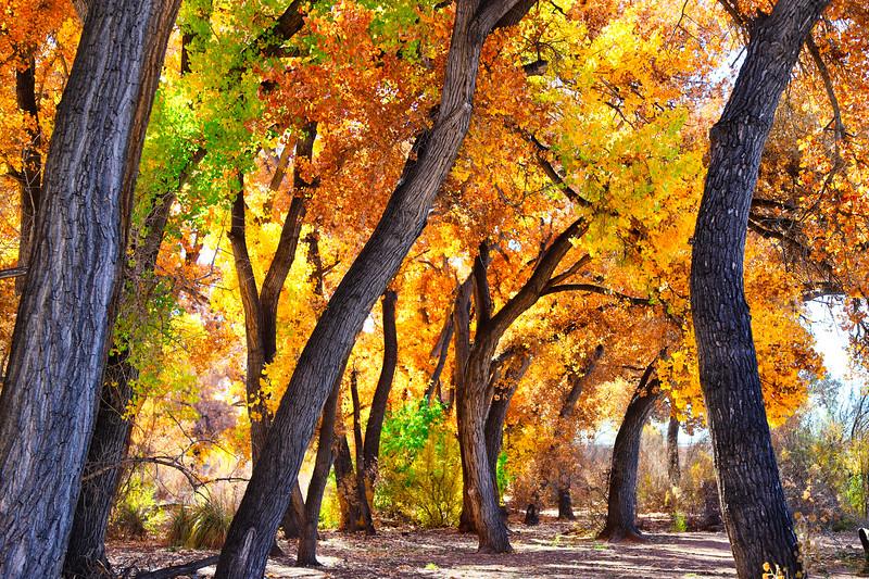 Fall in the Bosque