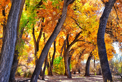 Fall in the Bosque