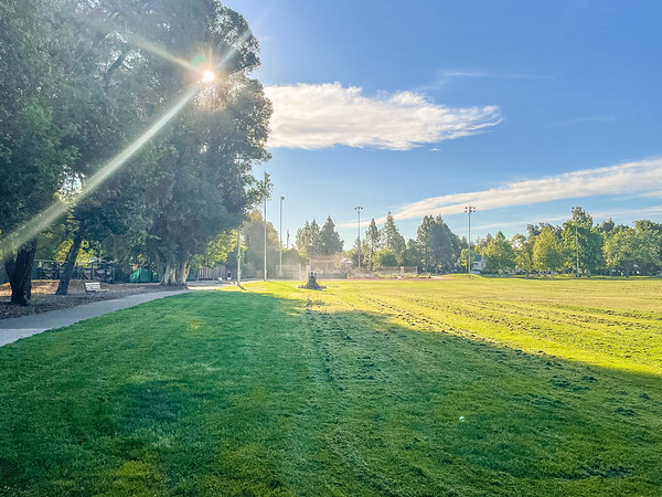 Fresh cut grass in the morning