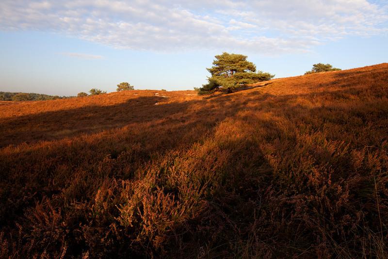 Brunssummer Heide