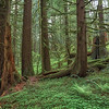 The beautiful green forests of Oregon.