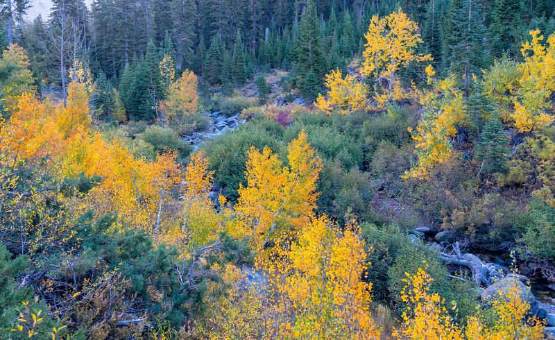 Deadman Creek Morning Fall Colors - Sonora Pass-4