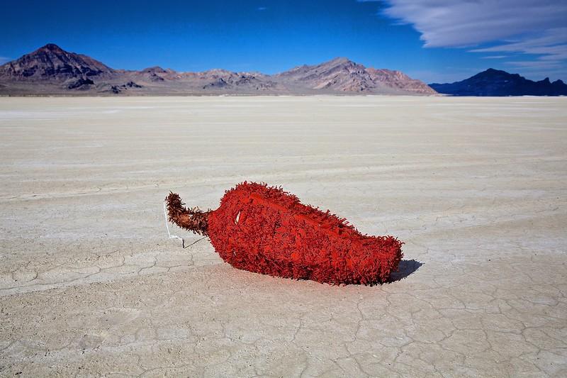 Jalapeño Pepper. Bonneville Salt Flats, Utah