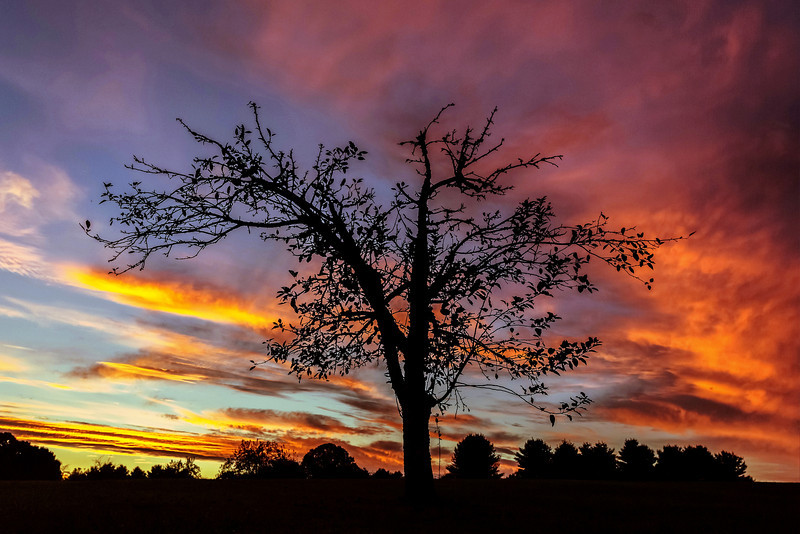 A sudden, surprise sunset offered a lovely tree silhouette in northern Georgia.