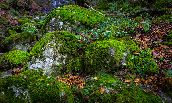Rocks, Moss and Autumn Leaves