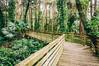 Eden's Boardwalk