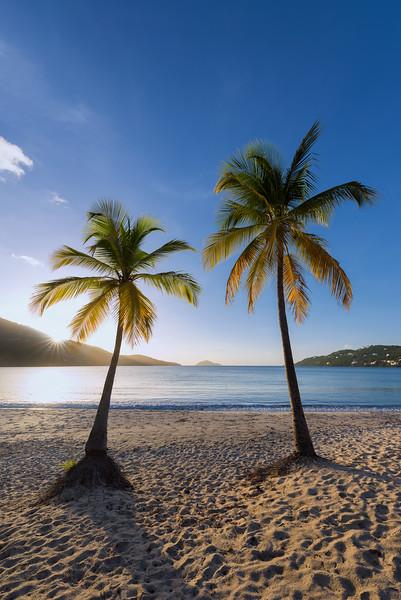 Palms at Magens Bay, St Thomas USVI