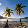 Palms at Magens Bay, St Thomas USVI