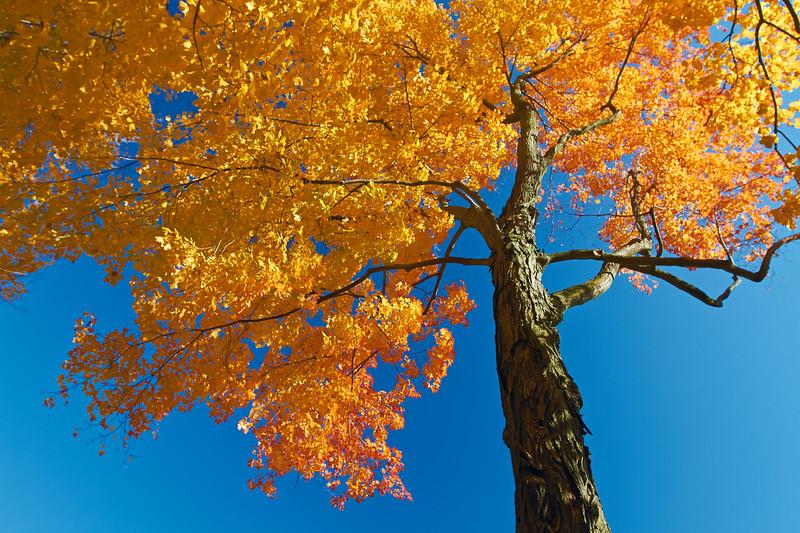 Fall Colors Tree