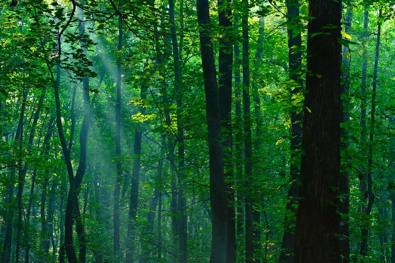 morning sunlight through the trees at Ebenezer Swamp near Montevallo, AL