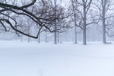 Winter in NYBG