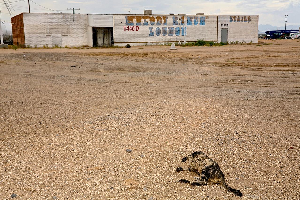 Dead Cat.  El Paso, Texas.