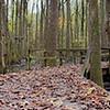 The Swamp at Wheeler NWR