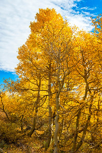 Fall Colors - Sonora Pass-6
