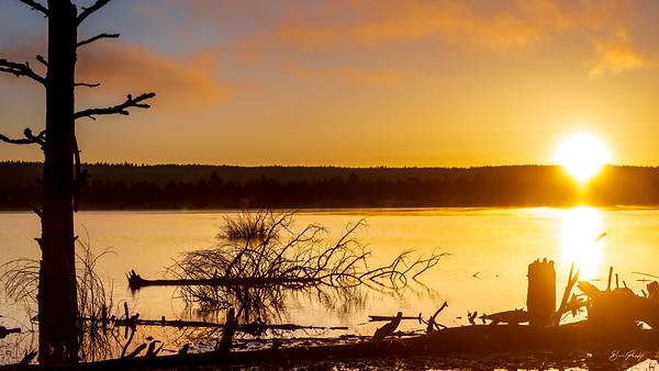 Gerber Sunrise
