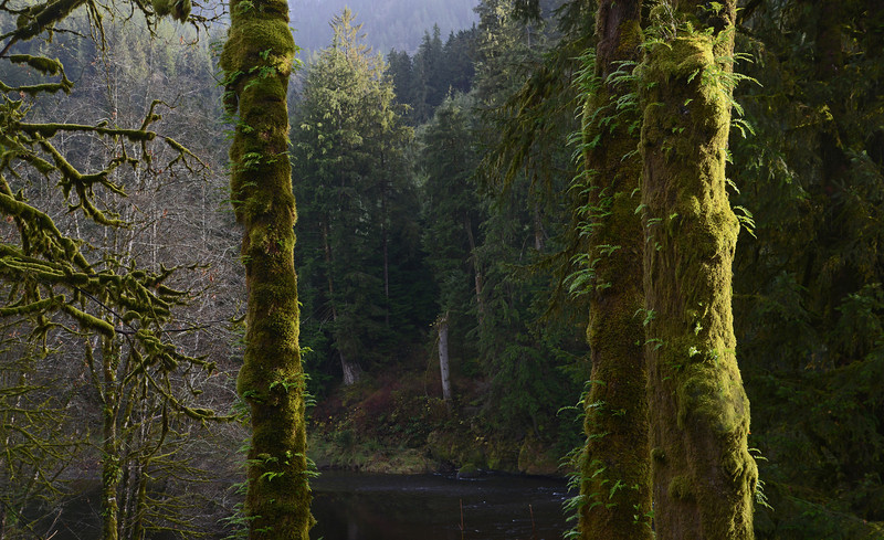 Temperate Rain Forest, Tillamook State Forest, OR