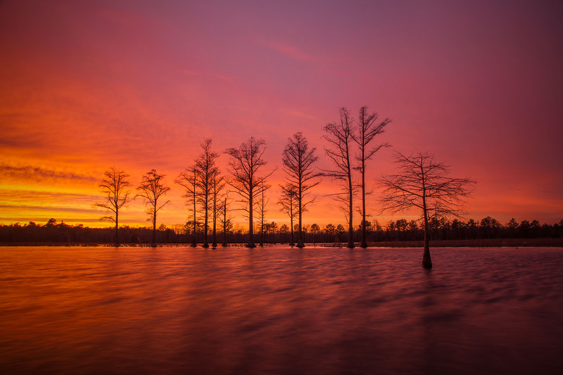 Rhodes Pond Cypress Sunset